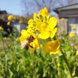 Beehive はちみつ 詳細画像